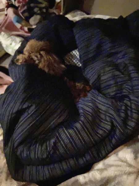 布団にもぐってこないで半纏で寝るララさん