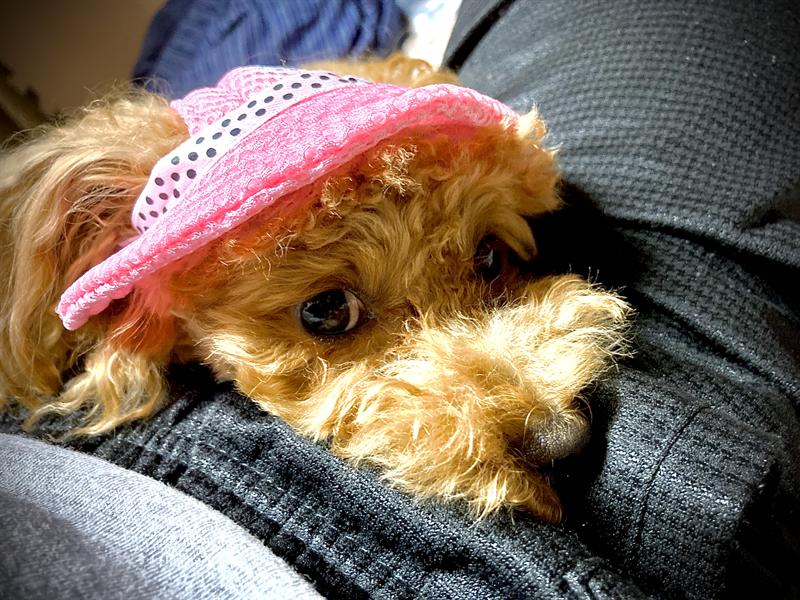 帽子姿のLALAさん